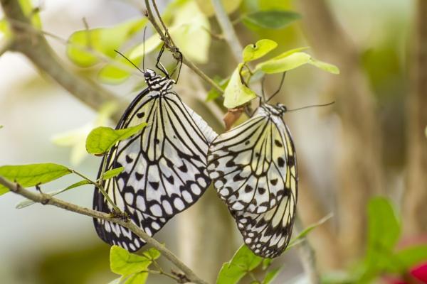 Butterflies by WorldInFocus