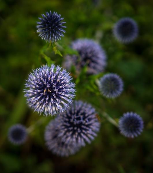 Plantarium by bouic
