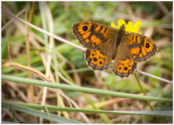 Butterfly ? by aka