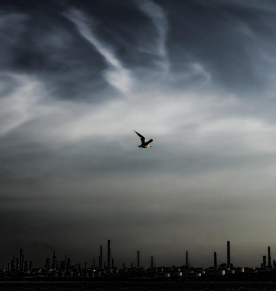 In Flight by billybonds