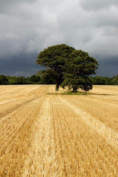 Tree by marktc
