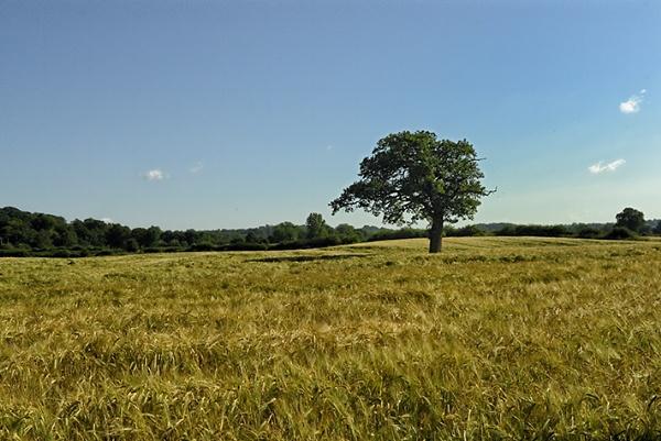 Meadow & Tree by malcsf