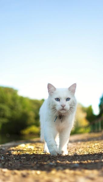 Somebodys Cat by digitalfingers