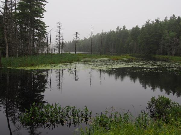 Summer in Maine #13 by handlerstudio