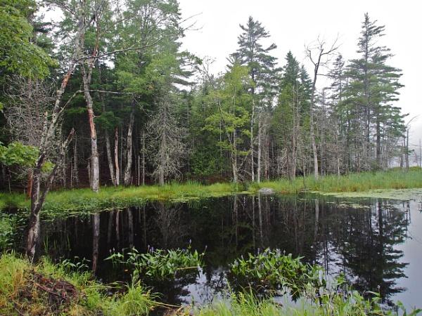 Summer in Maine #15 by handlerstudio