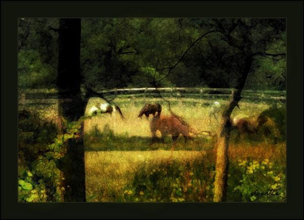 In the Meadow by doerthe