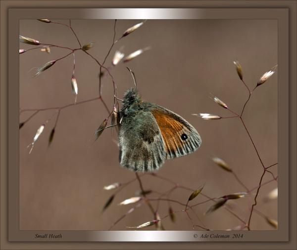Small Heath by ade123