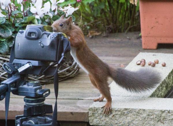 Squirrel selfie by johnbushell