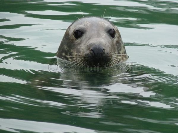 Seal by elliemoo