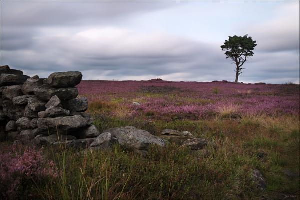heather moors by Jon.H