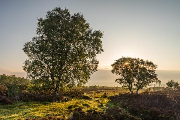 Sunlit Path by DalesLass