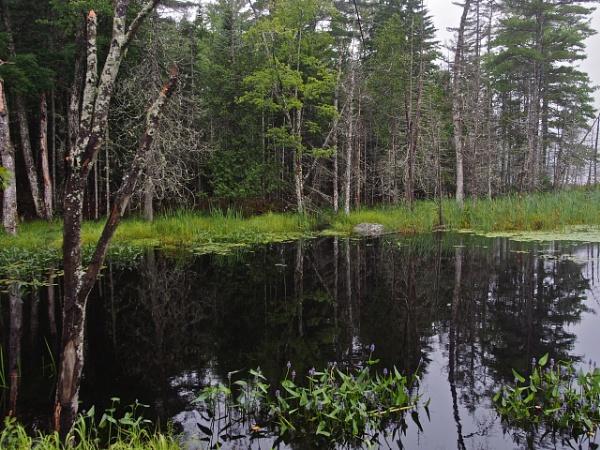 Summer in Maine #16 by handlerstudio