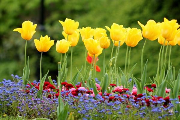 Tulip display. by BONKERS4CONKERS