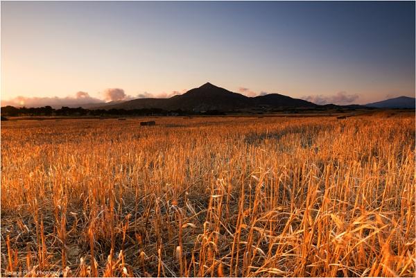 Golden field by GeorgePlatis