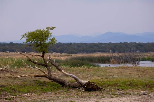 pintail lake by unk001
