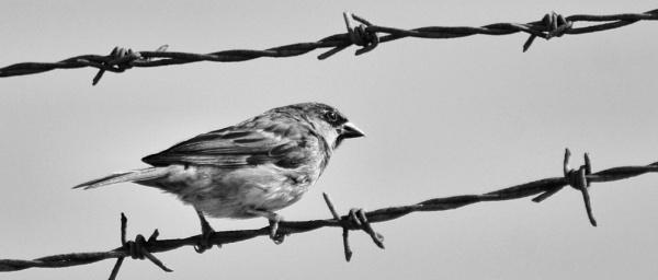 Bird on a wire by stu8
