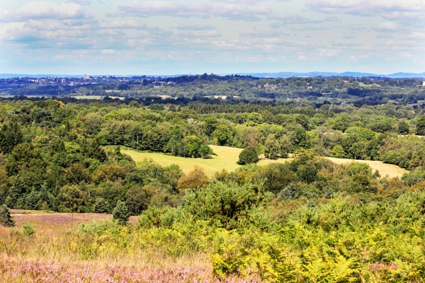 Ashdown Forest by Myathebirdwatcher999