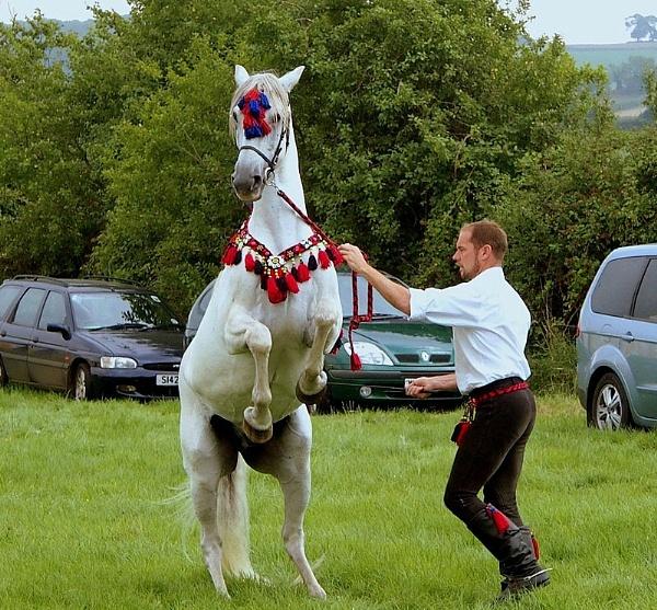 Beautiful Dancing Stallion. by brandish