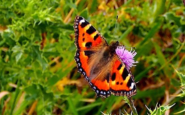 Butterflys by brandish