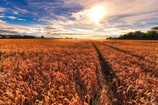 Time for Harvest by hollkj