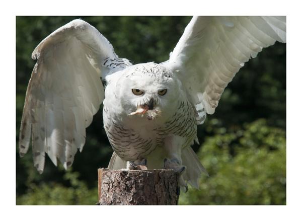 BIRD by MikeGillingham