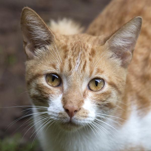 wild cat! by Lillian