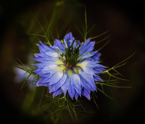 Flower by mondmagu