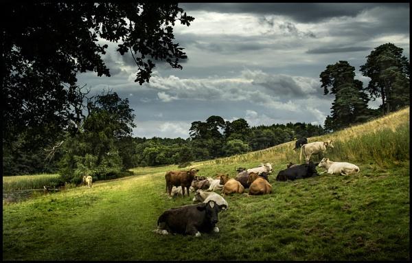 Shropshire Pastoral