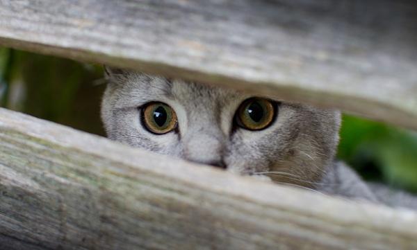 Nosey Neighbour by woodlandlad