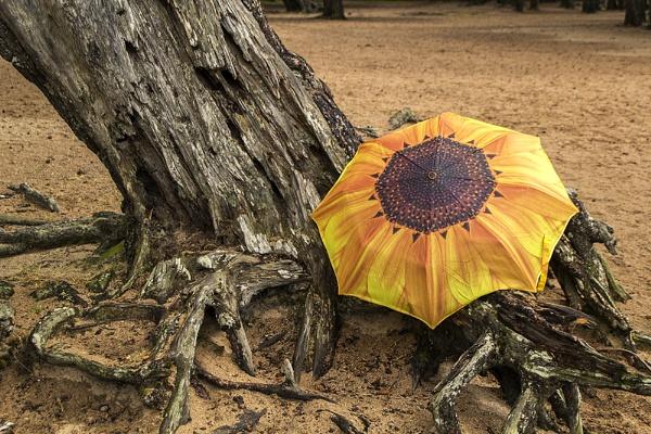Bark & Sunflower by Irishkate