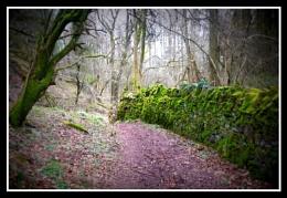 A mossy walk