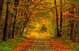 Autumn forest road