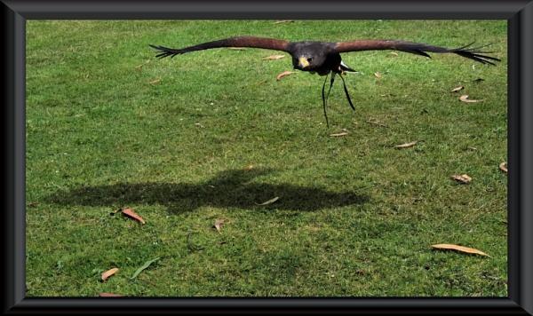 Shadow Glide by uzi35mm
