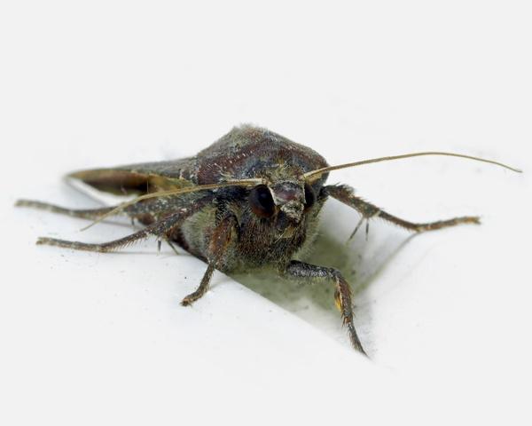 Moth by victorburnside