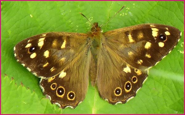 Butterfly. by brandish