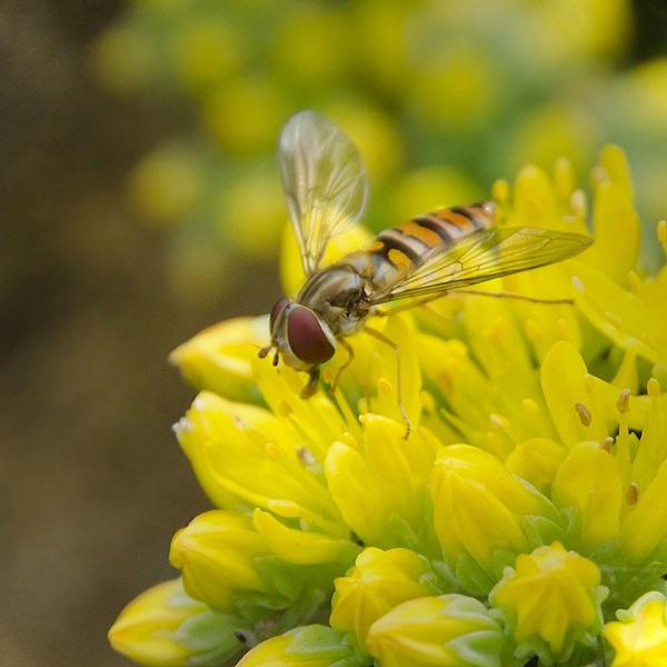 Ah, sweet nectar... by liarsdance