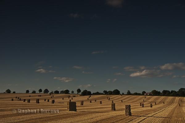 Harvest Fields by Stephen_B