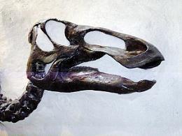 Dinosaur Fossil Head