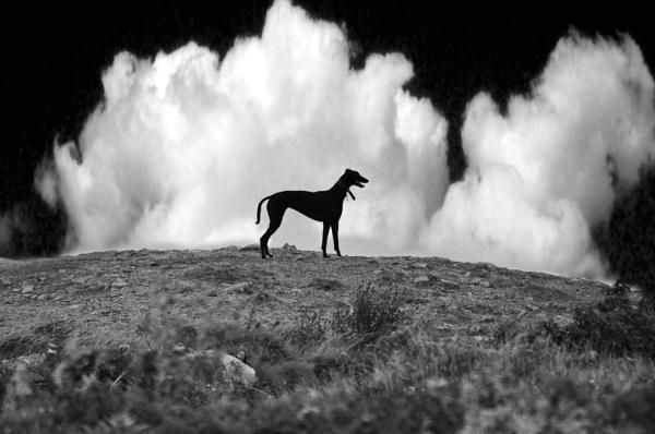 Black dog by jhw