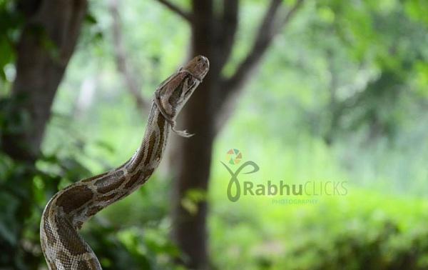 Snake by prabhuv