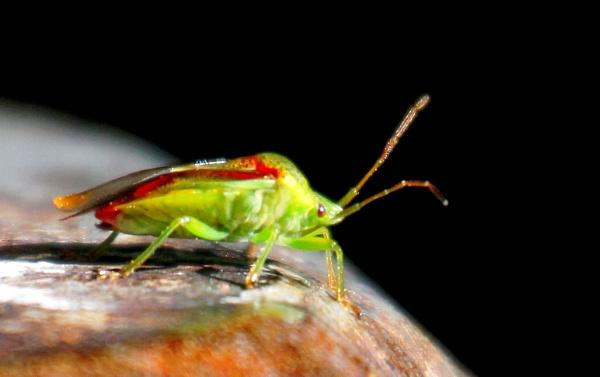 Spit Bug  CarolG? by tonyguitar