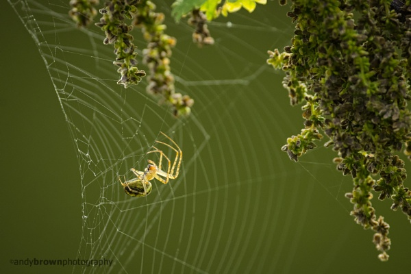 Spider by ABPhotosUK