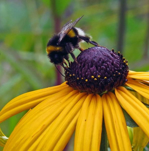 nectar time by EssexBienen