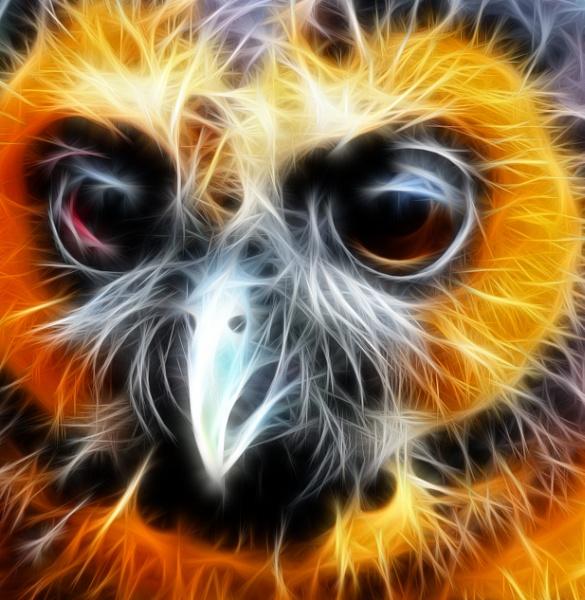 Owl by PeeKay67