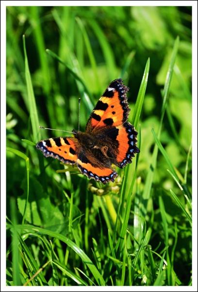 Butterfly by alan2603
