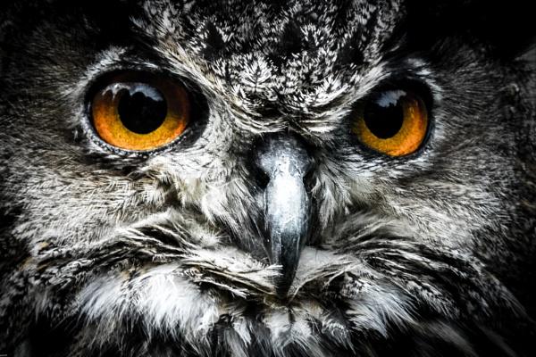 eagle owl by LGHSTF