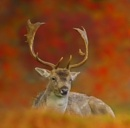 Deer by clintnewsham