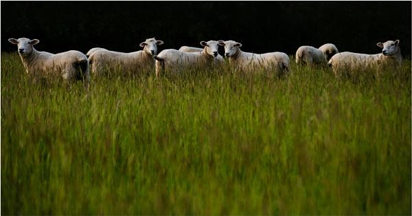 Evening on Romney Marsh by mrswoolybill