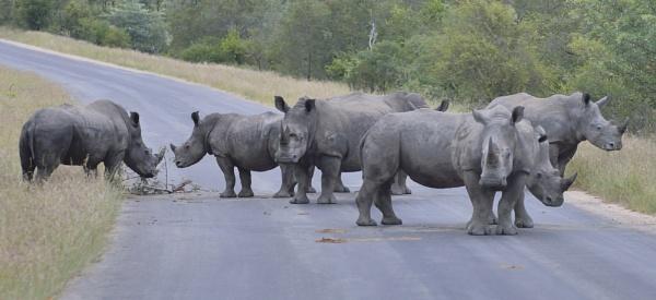 Road Block by Kruger01