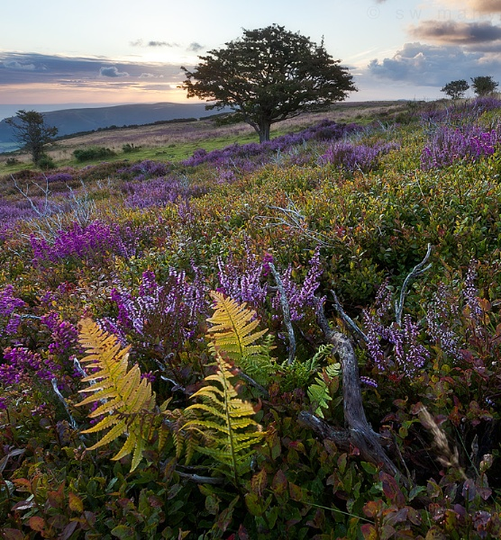 Exmoor by SWMahy